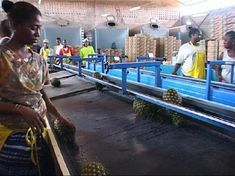 Ivorians look for EPA saviour