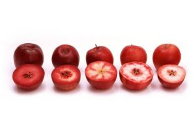 Australian potential for red-fleshed apples