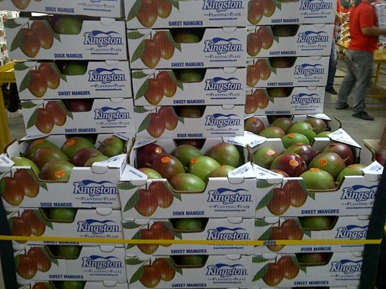 Kingston broadens imported mango supply
