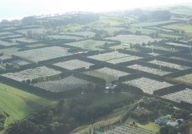Australia considers kiwifruit production