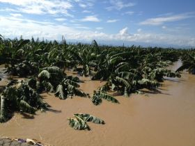 Devastation for Philippine crops