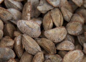 RM Curtis recalls packs after Brazil nut error