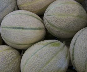 Guadeloupe PGI melons get first outing