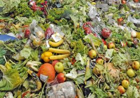 UN paints food waste picture