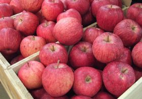Climate change 'affecting apples'