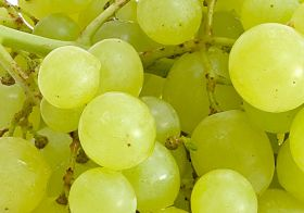 Grapes 'help counter stress'