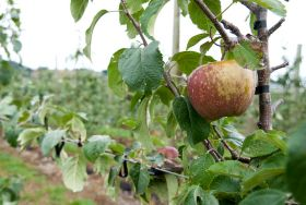 Gales hit Nelson fruit crops