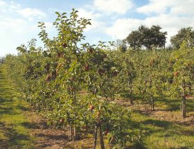 Experts to present latest tree fruit research
