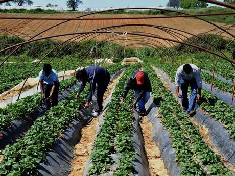the exploitation of migrant workers in the agricultural industry in america Exploitation of migrant labour and human trafficking  the exploitation of migrant workers and illegal human  in both the exploitation of migrant labour and.