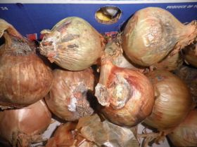 Retailer fined for selling rotten produce
