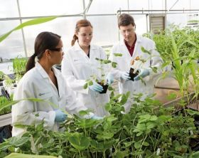 Bayer continues crop science commitment