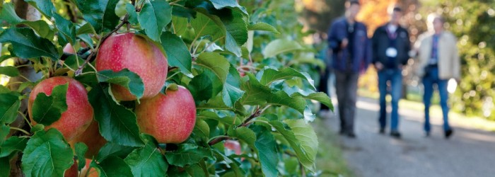 EU apple and pear crops bounce back
