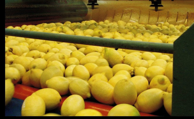 Russia omits lemons from Turkish ban