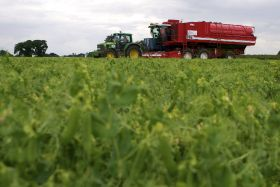 24-hour British pea harvest underway