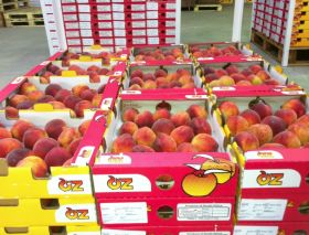 A$16.9m fruit fly package for Australia