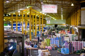 UN targets wholesale markets
