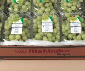 India set for bumper grape crop