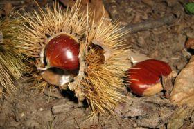 EU nut producers raise concerns