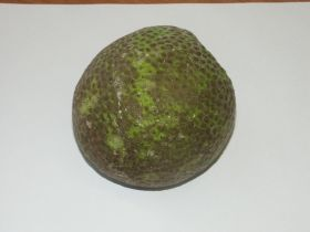 Breadfruit 'most effective' mosquito repellant