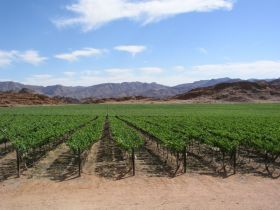 Orange River sets grape record