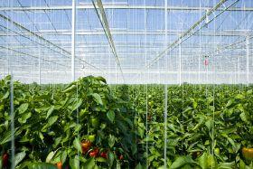 Thanet Earth 'bins' £320k of produce