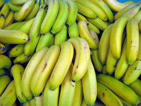 Growth for Panama's banana exports
