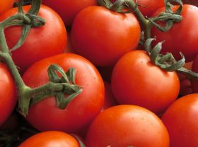 Supermarket tomatoes 'need to be dunked in hot water'