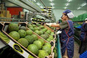 Water shortage halts Spanish avo expansion