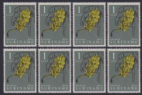 Univeg buys into Suriname bananas
