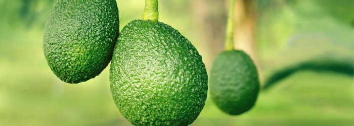 Avocado marketers set sights on further growth