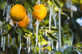 Late-season freeze for Central Valley