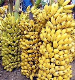 Indian banana prices soar