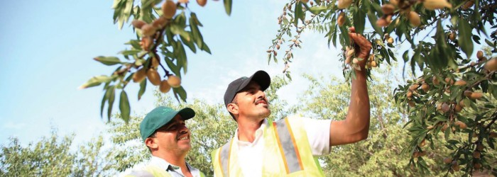 Investors shell out for almond orchards