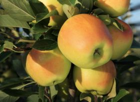 Pension fund buys Broetje Orchards