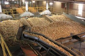Australian onion giant sold for A$10.5m
