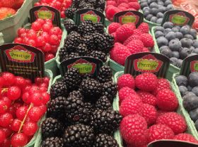 Innovation key to future of fresh berries