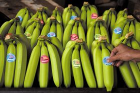 Aborted banana price move puts Fairtrade campaign into focus