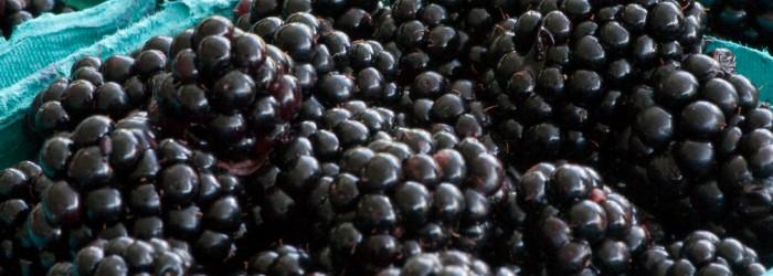 Driscoll's predicts blackberry boom