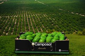Camposol plans dual share listing