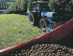 Australian macadamias break new ground