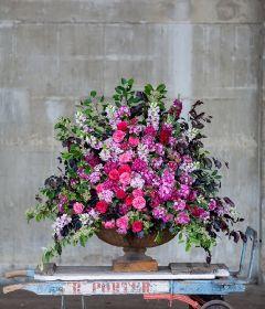 Hybrid urn of Sweet Williams