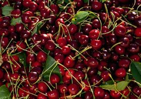 """Vintage crop"" of NW cherries"