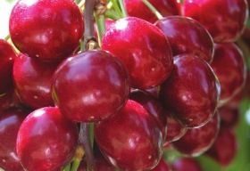 US cherries popular with Indian consumers