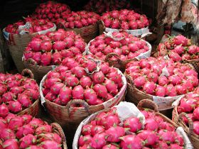 Vietnam dragon fruit exports fall