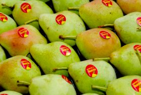 More apples but fewer pears for Catalonia