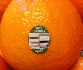 US grabs larger share of Uruguayan citrus