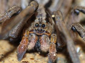 UK shop owners discover tarantula among bananas