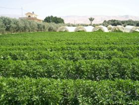 Jordan adopts new practices and crops