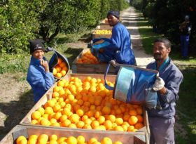 Spain ramps up pressure on RSA citrus