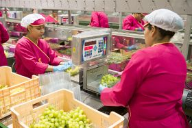 Murcia showcases grape offer in Asia